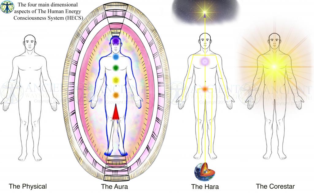 Energy Anatomy  